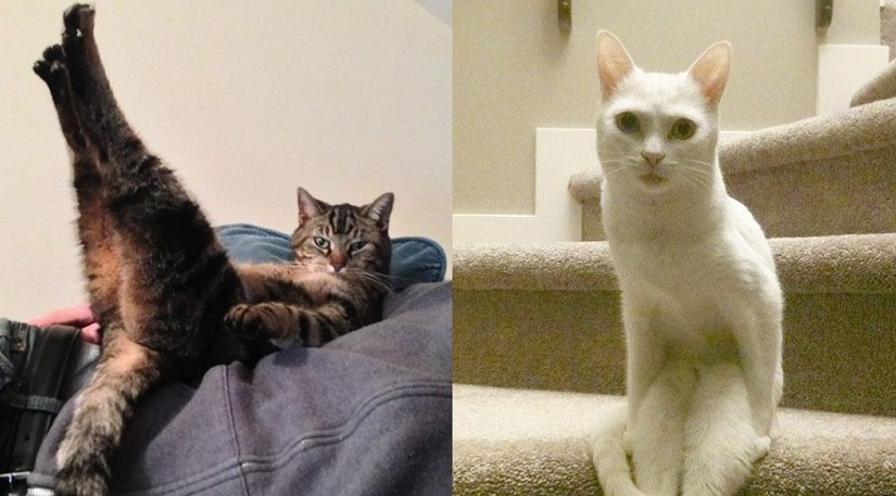 15 кошек, которые доказывают, что они живут в своём кошачьем мире