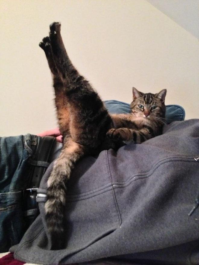 Кот по имени Дэйв, который любит лежать в таком положении