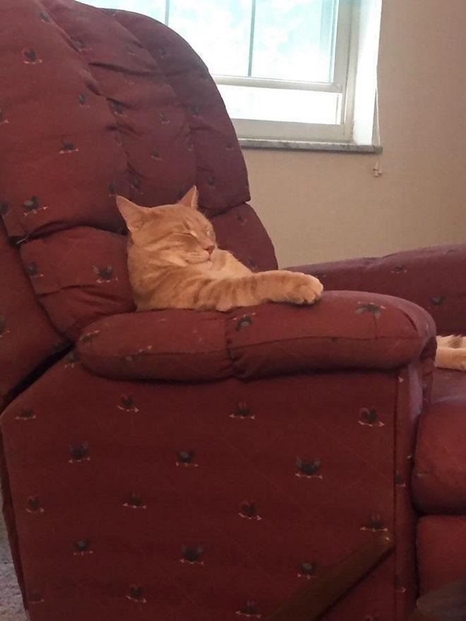 Этот кот похож на старика, который задремал в кресле, смотря телевизор