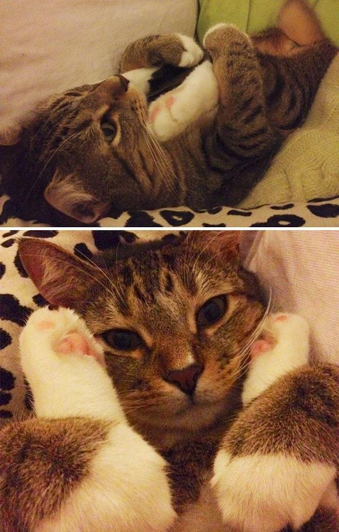 Кошки иногда делают странные вещи, потому что они кошки