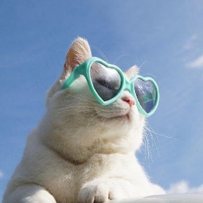 А кому-то, чтобы быть крутым, достаточно одеть лишь очки