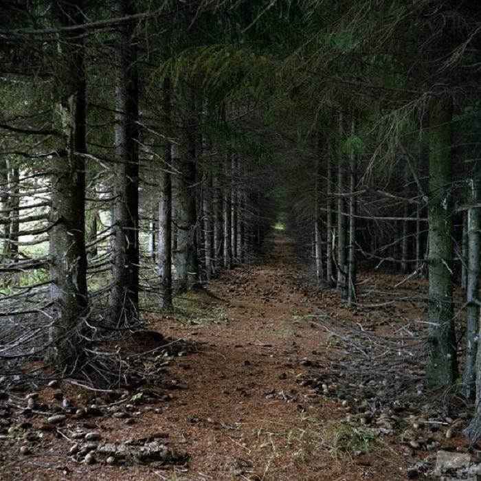 Шервурдский лес тоже родом из легенд Британских островов