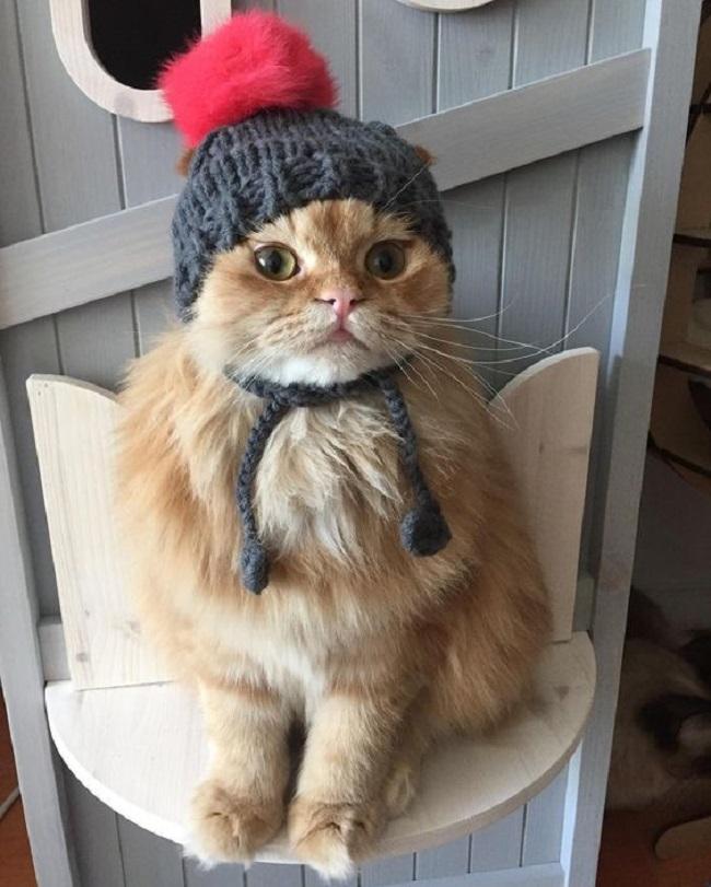Чтобы зимой не замёрзнуть, нужно надевать шапку