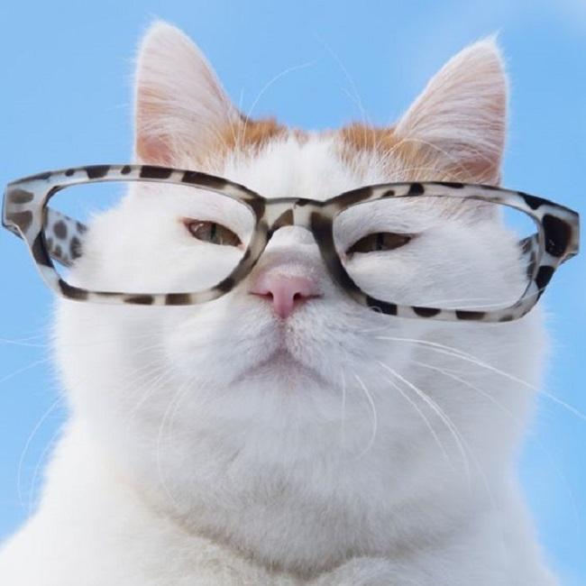 Профессорский кот такой же умный, как и профессор