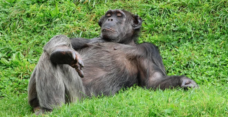 ТОП-15 фото смешных обезьян