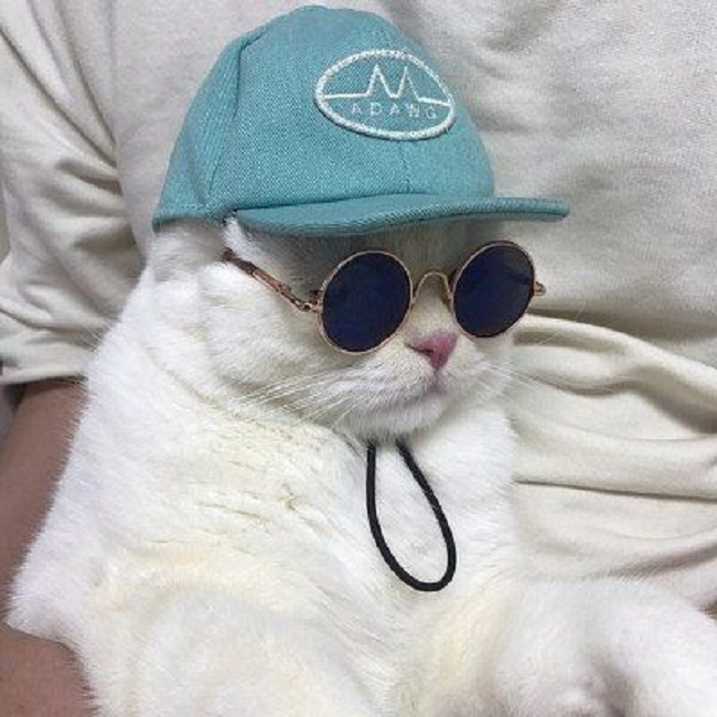Хип-хоп рулит, и коты тоже...
