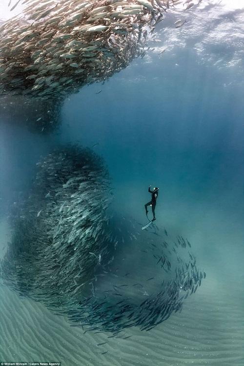 А фото с рыбками ещё нужно постараться сдклать