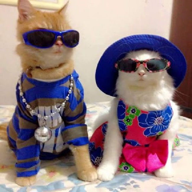 Наверное так выглядят коты Филиппа Киркорова и Аллы Пугачёвой