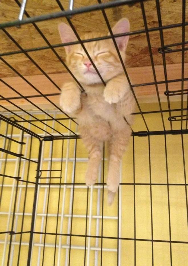 Однажды этого кота застали в таком положении. Очень удобное место и поза для сна