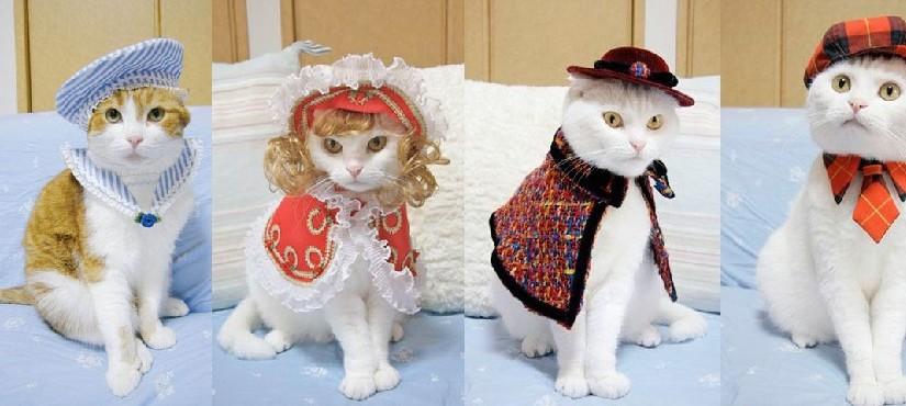 20 стильных образов кошек. Фото