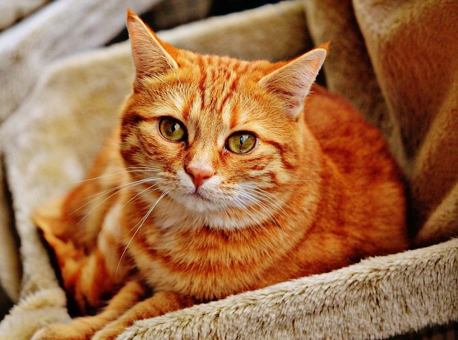 Анатолийская кошка издаёт птичьи звуки