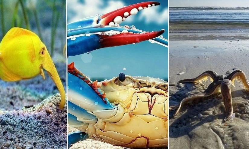 Удивительные обитатели подводного мира на фотографиях