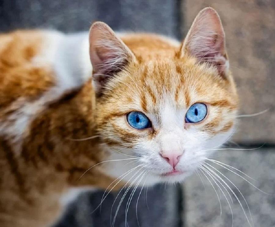 Охос азулес имеет голубые глаза