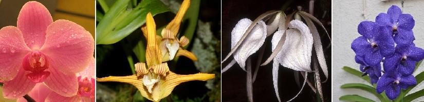 ТОП-40 самых популярных орхидей: фото с названиями и описанием