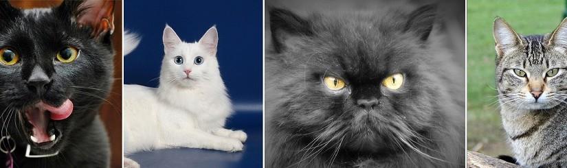 Самые известные и популярные породы кошек с фотографиями