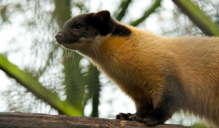 Домашние экзотические животные: харза