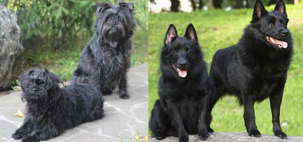 Маленькие породы собак: фото, описание, характер