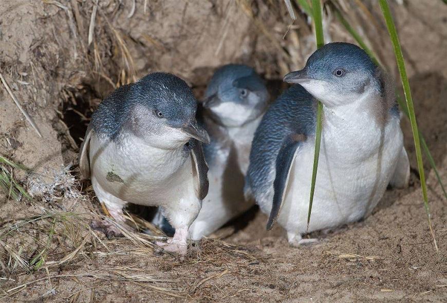 Экзотические домашние животные: пингвин