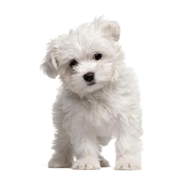 Самые красивые породы собак с описанием и фото