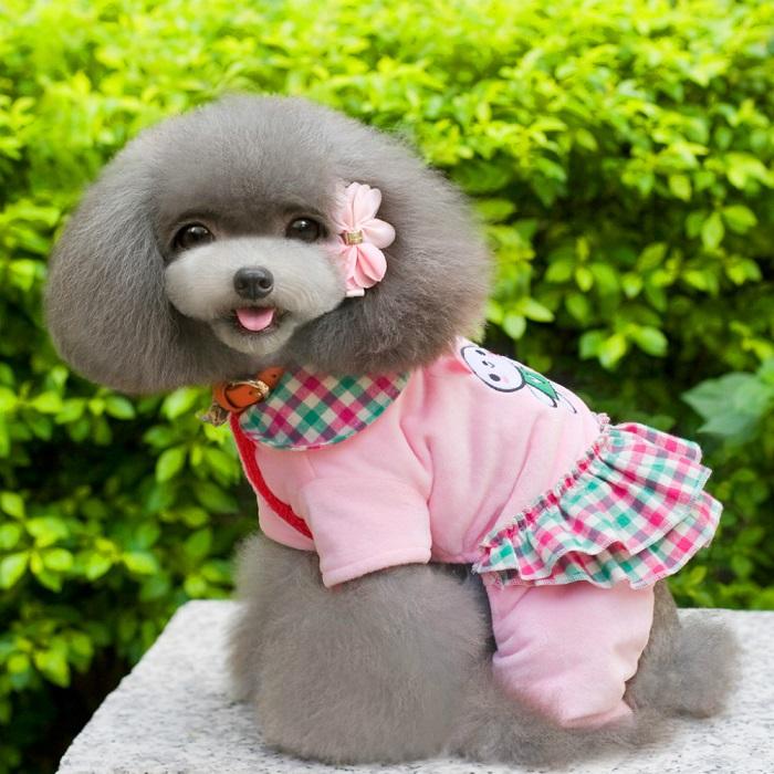 Самые красивые собаки в мире: пудель