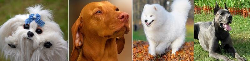 Фотографии самых красивых собак в мире: ТОП-26 пород